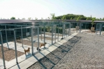 new shelter canile save the dogs romania realizzato da laika